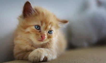 31 conseils pour élever un chaton en appartement