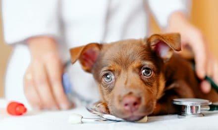 Mutuelle animaux – Tout savoir sur l'assurance pour chien et chat