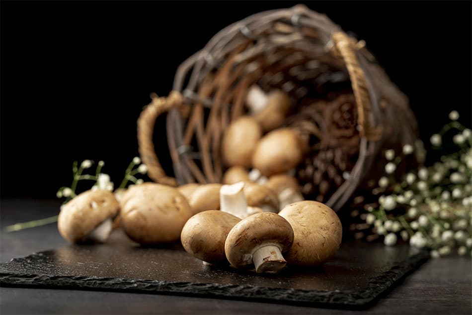 champignons médicinaux