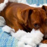 Comportements de chien expliqués