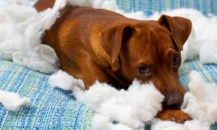 5 comportements de chien fréquents déchiffrés