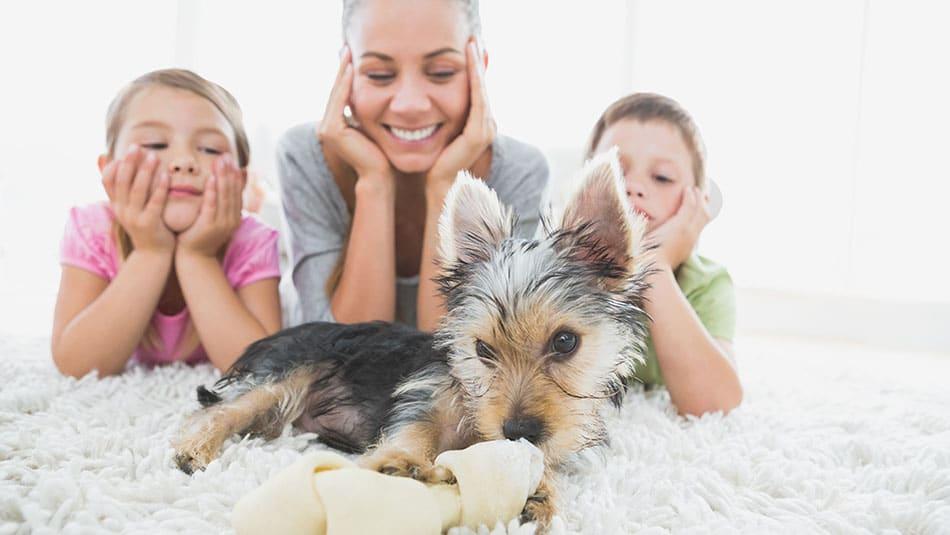 Chien d'appartement – Quelles sont les races adaptées ?