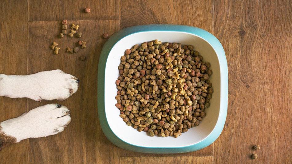 bienfaits des acides gras pour un chien