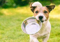 Chiens : 7 conseils pour nourrir vos animaux correctement