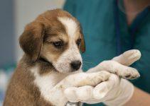Quels sont les avantages d'une assurance chien ?